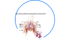 http://www.webmd.com/lung/how-we-breathe