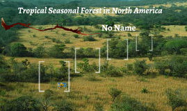 Tropical Seasonal Forest in North America
