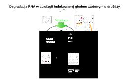 degradacja rna w autofagii indukowanej głodem azotowym