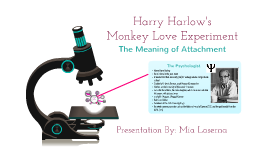 Copy of Harry Harlow- Monkey Love