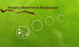 Hongos y Bacterias en Brassicaceae