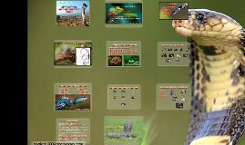Copy of Noções de Fisiologia Reprodutiva e Obtetrícia em Serpentes