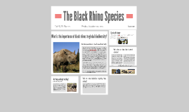 The Black Rhino Species