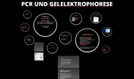 Copy of PCR UND GELELEKTROPHORESE