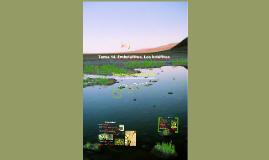 2017. Las plantas terrestres. Los briófitos (T15) para Biotecnología.