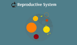 Reproductive system 1