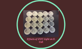 Effects of UV Light on E. Coli