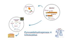 Pyruvatdehydrogenase & Citratzyklus