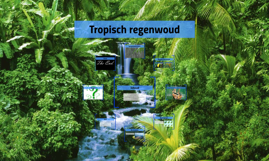 Copy of Tropisch regenwoud