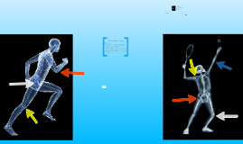 GCSE PE - JOINTS The Skeletal System