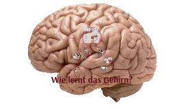 Wie lernt das Gehirn?