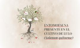 ENTOMOFAUNA PRESENTE EN EL CULTIVO DE LULO (Solanum quitoens