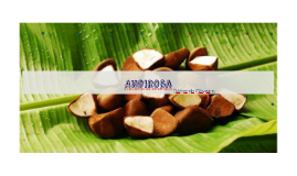 Copy of Andiroba