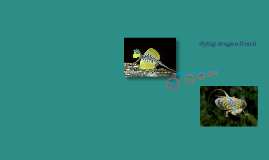 Copy of flying dragon lizard