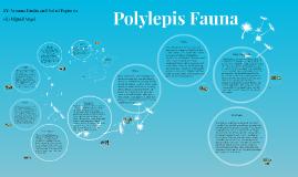 Polylepis and Tunas y Cabras