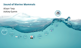 Sound of Marine Mammals
