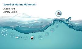 Sound of Marine Mammals