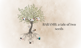 BABAMB: a tale of two seeds