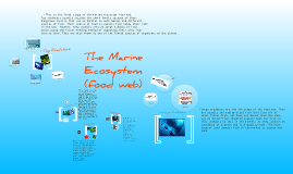 Marine Ecosystem (food web)