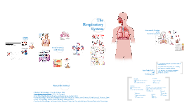 Copy of Respiratory System