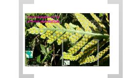 Copy of Ciclo biológico de las plantas pteridofitas