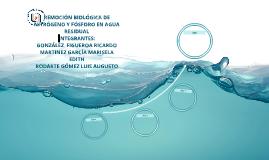 REMOCIÓN BIOLÓGICA DE NITRÓGENO Y FÓSFORO EN AGUA RESIDUAL
