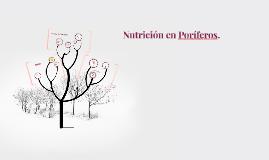 Copy of Nurición en Poríferos.