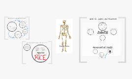 GCSE PE The Skeletal System