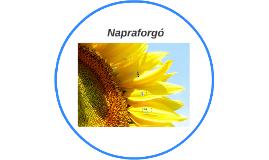 Copy of Copy of Napraforgó