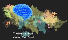 Human Anatomy Brain Project