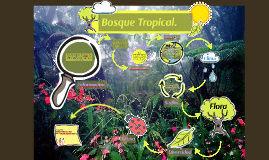 Copy of Bosque Tropical.