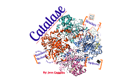 Copy of Copy of Enzyme Project--Catalase