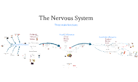 The Brain and Behaviour