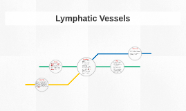 Lymphatic Vessels