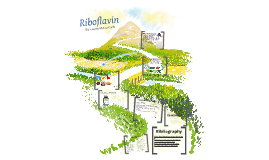 Riboflavin Presentation