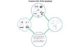 INSPECCIÓN ANTEMORTEM