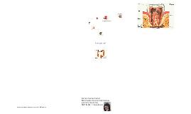 Copy of Изучаем пищеварительную систему