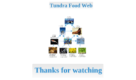 tundra food web!!!!