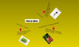 Tipos de raices