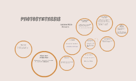 Copy of Photosynthesis Project