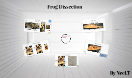 Frog Disection