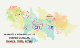 ANATOMÍA Y FISIOLOGÍA DE LOS ÓRGANOS SEXUALES.