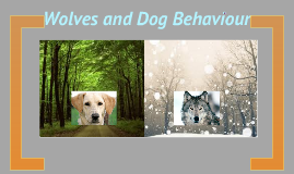 Wolves and Dog Behaviour