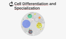 Cell Differentiation and Specialization