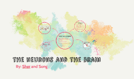 The neuron and the brain