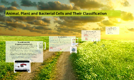 Animal, Plant and Bacterial Cells and Their Classification