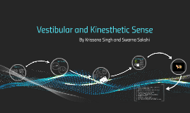 kinesthesis and vestibular Kinesthesis : the system for sensing the position and movement of individual body parts the receptor cells for kinesthesis are found in our vestibular sense : the.