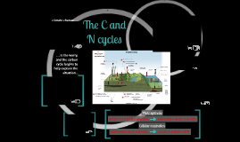 ANSC 227: The Carbon Cycle