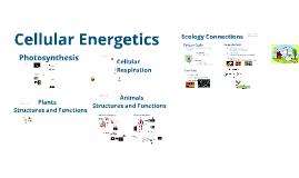 Cellular Energetics