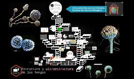 Estructura y ultraestructura de los hongos